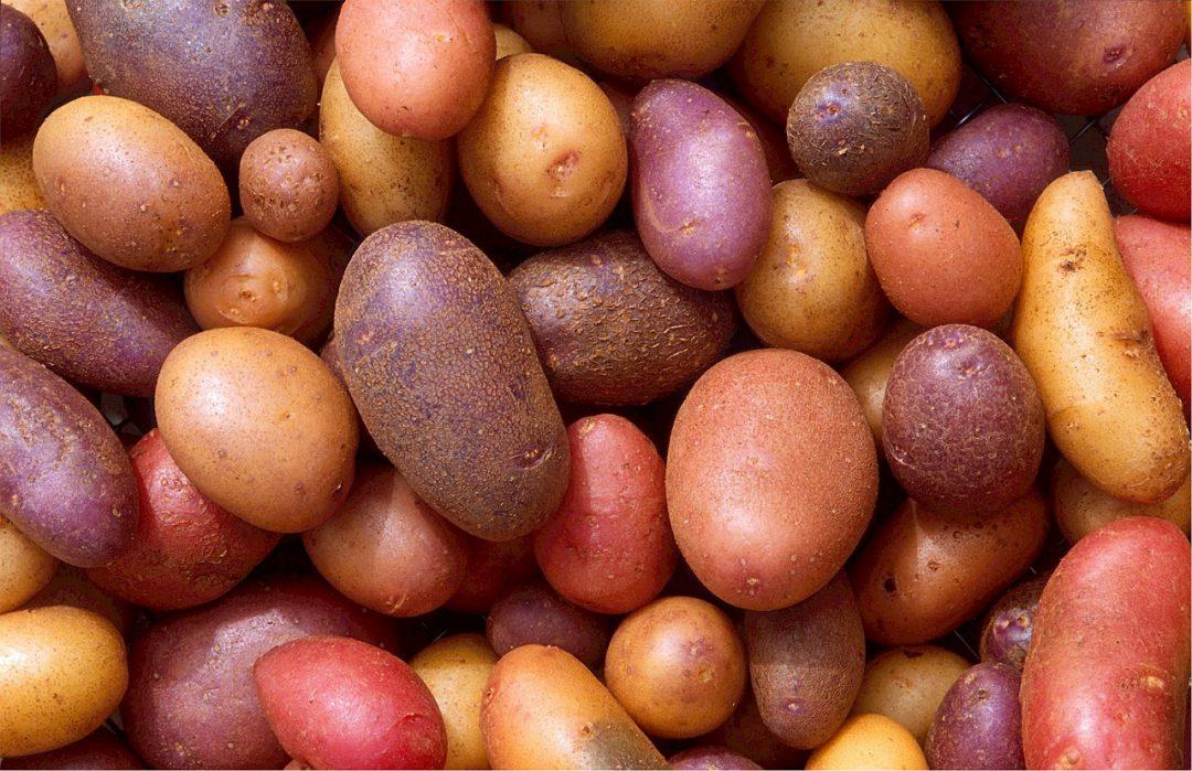 Las mejores patatas para preparar tortilla